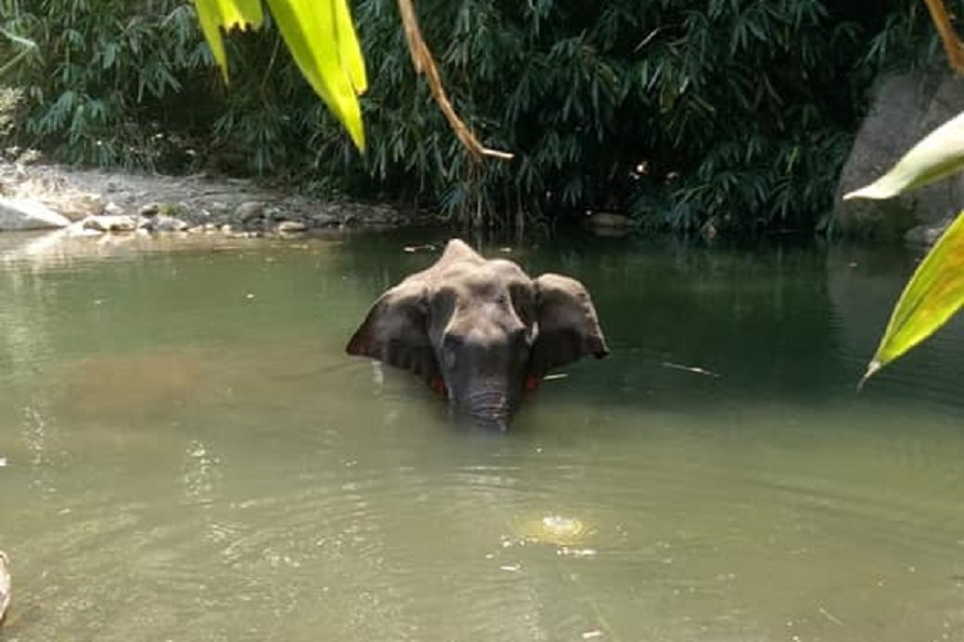 pregnant elephant killed with explosives